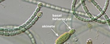 cyanoScope guide published on iNaturalist